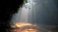 بحثی که اخیراً آقای دکتر سروش در مورد رؤیا و فهم قرآن مطرح کردهاند رابطه وثیقی با فهم حقیقت وحی دارد با اینکه فرضیه ایشان به صورت مستقیم با آن...